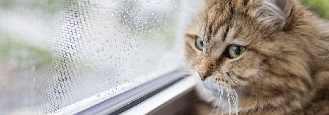 Dážď a sme doma